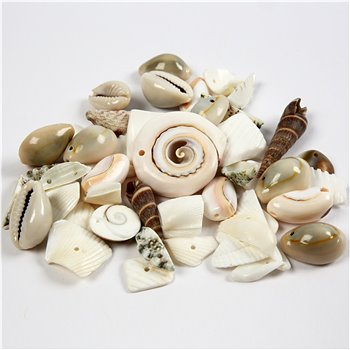 Conchas marinas - 120 gr