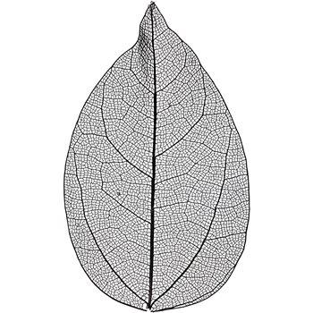 Esqueleto de hojas - 20 unidades